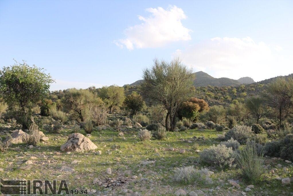 خبرنگاران 11 روستای باشت در منطقه حفاظت شده خامین باشت قرار گرفته است